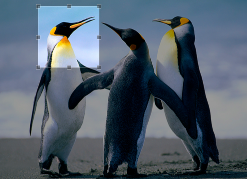 Recortar imágenes con Jcrop y PHPThumb